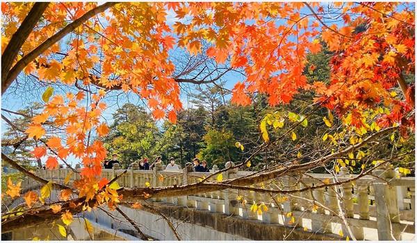 대한불교 조계종 제4교구 월정사 입구 가을단풍이 마치 홍시가 곱게 익듯 아름다운 빛을 보이고 있다.